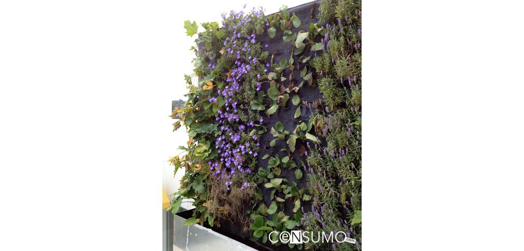 Jardines verticales muros for Jardines verticales concepto