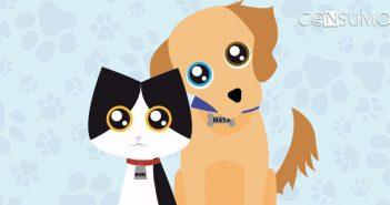 Medidas preventivas para evacuar perros y gatos en caso de desastre