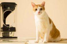 ¡Increible! Conoce el alimentador para gatos que utiliza reconocimiento facial
