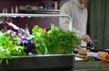 Smart Herb; tu propio huerto con tecnología de la NASA